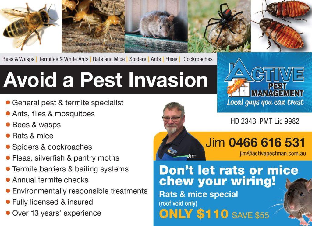 Active pest specials Perth
