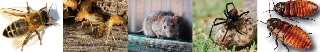 Active Pest control Perth